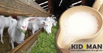 козы и козье молоко
